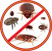 Уничтожение тараканов,блох,клопов,крыс и мышей. Одеса