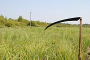 Викошу траву (бур'ян) в м. Луцьку та поряд Луцк