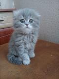 Продам котят Миколаїв