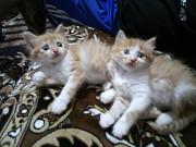 Отдам пушистых котят в заботливые руки. Запоріжжя
