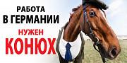 Потрібен добрий КОНЮХ, КОНЯР, догляд за кіньми Київ