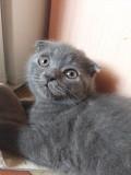 Висхоухий котик ищет дом Запоріжжя
