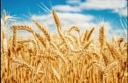Зернові Запоріжжя