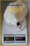 Яйца инкубационные перепела Техасец - бройлер (США Texas A & M). Одеса