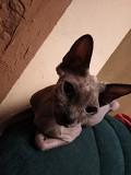 Кошка Первомайськ