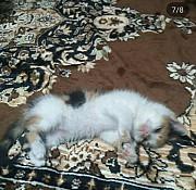 Срочно отдам котенка Кропивницький