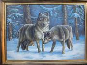 волки зимой Луцьк