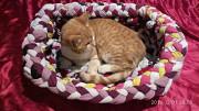 Лежак для котика чи собачки Вишгород