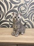 Шотландские котята Запоріжжя