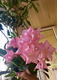 Продам комнатные цветы молодые Миколаїв
