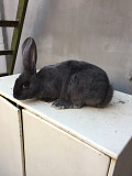 Кролики Одеса