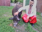 Хряк-мангал Київ