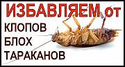 Уничтожение клопов тараканов грызунов Умань
