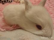 кролики Новомиргород