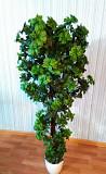 искусственные деревья Хмельницький