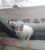 Трёхмасные кошечки-мышеловки ищут дом Кременчук