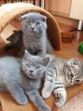 Продам самых ласковых котят Запоріжжя