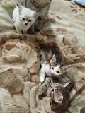 Подарю миленький котят Херсон