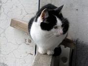 Пропал кот Хмельницький