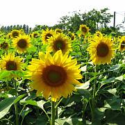 Все для врожаю:насіння, ззр, паливо Василівка