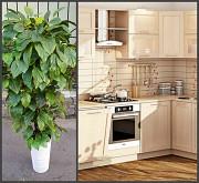искусственные деревья для дома Хмельницький
