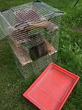 Продам велику клітку для гризунів! Розмір 57х40х83см. для шиншил дегу Рава-Руська