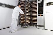Инкубационное яйцо бройлер Одеса