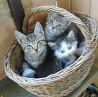 Кошки Київ