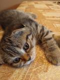 Продам котиків Тернопіль