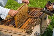 Продам бджоли з вуликом Гайсин