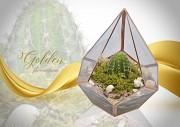 Золотой Флорариум. Шикарный Подарок На 8 Марта . Суккуленты Рівне