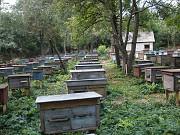 Продам бджолосім`ї! Вінниця