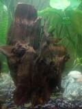 декорації в акваріум Рівне