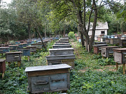 Найвигідніша пропозиція по продажу бджолопакету! Вінниця