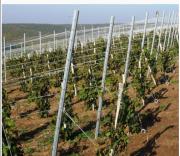 Металлическая опора, для установки шпалеры в садах и виноградниках Кропивницький