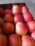 Продам яблука Чернівці