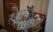 котята Полтава