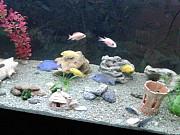 Продам аквариум 250 литров Одеса