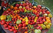 продам семена разных томатов Київ