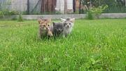 Прекрасні кошенята у прекрасні руки! Тернопіль