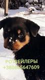 Ротвейлер Дніпро