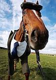 Разноробочий, Рабочий, Конюх, ферма, сельское хазяйство, Різноробочий, работа в Германии с лошадьми Київ