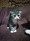 Продам чудесного котенка Полтава