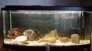 Продам аквариум 240 литров Київ