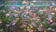 Тернеция Glofish ( глофиш ) Київ