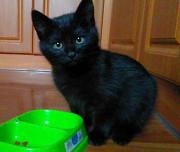 Домашний котёнок для Вашего дома Харків